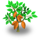 Cacao Tree Harvest 2