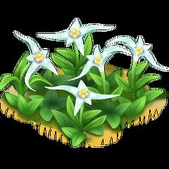 Star Grass (Cowlick)