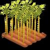 Sugarcane Stage 4