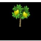 Lemon Tree Harvest 2