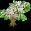 Cherry Tree Stage 2