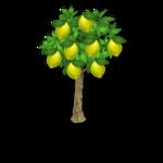 Lemon Tree Harvest 3