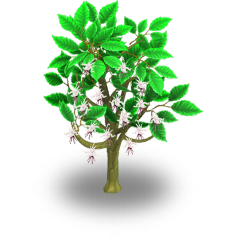 File:Cacao Tree Stage 2.png