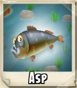 Asp Photo