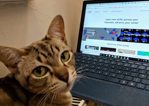 Cat distance learning