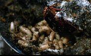 Hellraiser 012 - Maggots