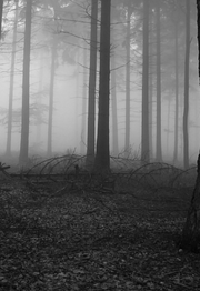 Haunted-Forest-by-99villages