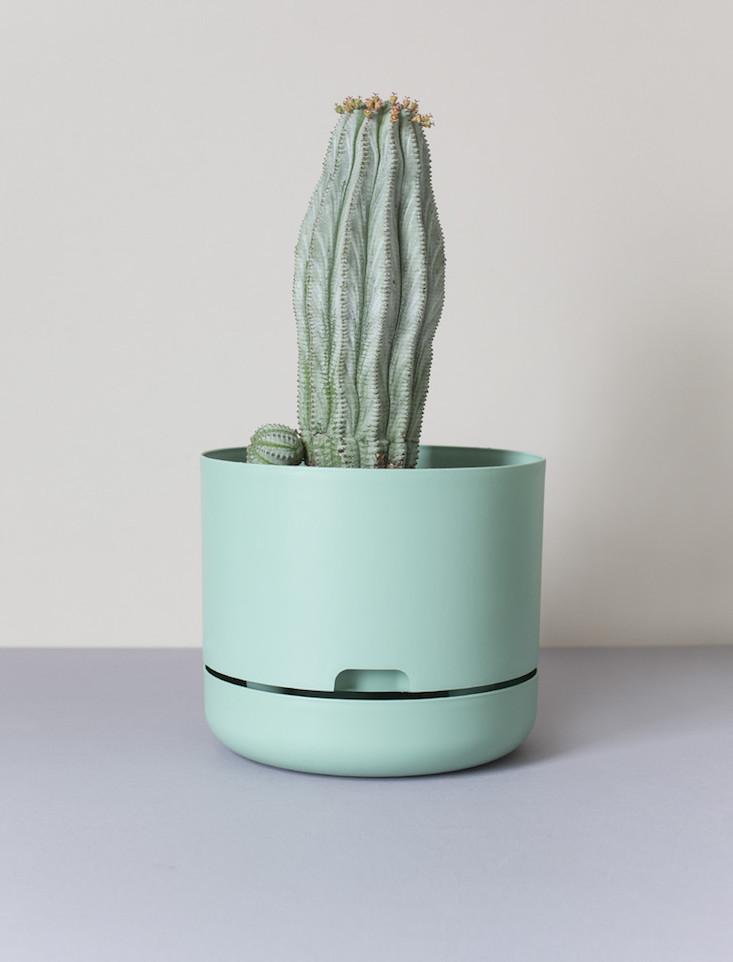 Lilcactus
