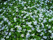 Blueflowerr