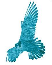 Fluidic Falcon