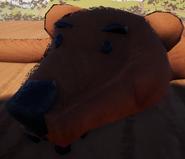 Медвежья шкура3