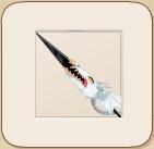 The Emperor's Dragon Sword