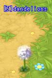 A Dandelions