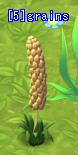 A Grains