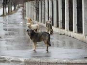 Straydogs