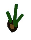 Pine Tree Seed