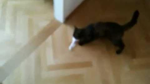 World's Most Playful Cat