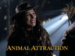 Animal Attraction TITLE