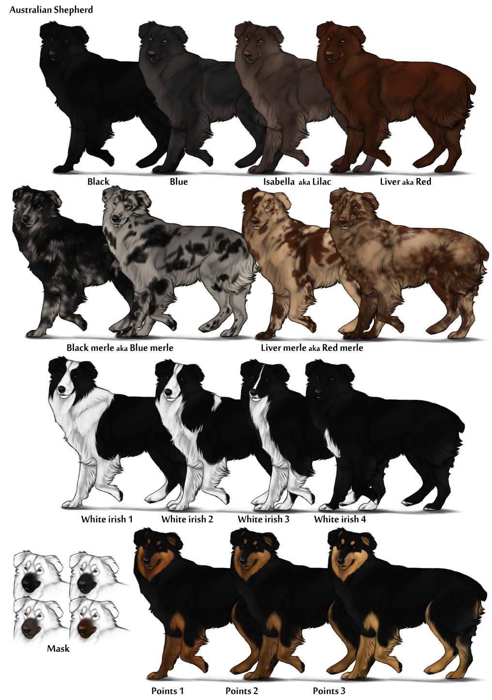 Image australian shepherd color chartg herding dog farms australian shepherd color chartg nvjuhfo Images