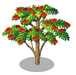 African Flame Tree