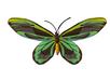Queen Alexandras Birdwing