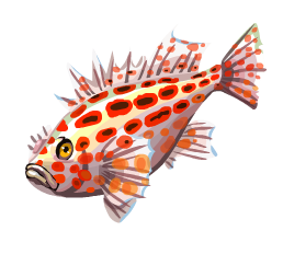 Coral Hawkfish | Coral Hawkfish Here Be Monsters Wiki Fandom Powered By Wikia