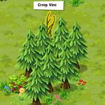 Sella Valley-Creep Vine