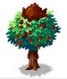 Toffee Apple Tree