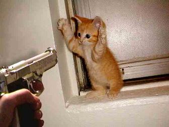 Funny-cat-surrender