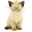 Real Meowth Meowth Real D by AxelPows