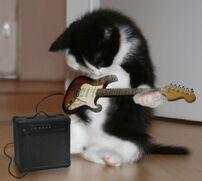 Guitar-kitten