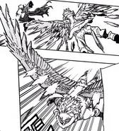 Fierce Wings Hawks