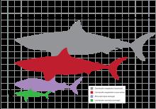 Megalodon size