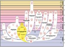 Trilobite lineage