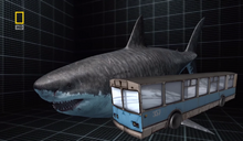 Megalodon compared to a bus