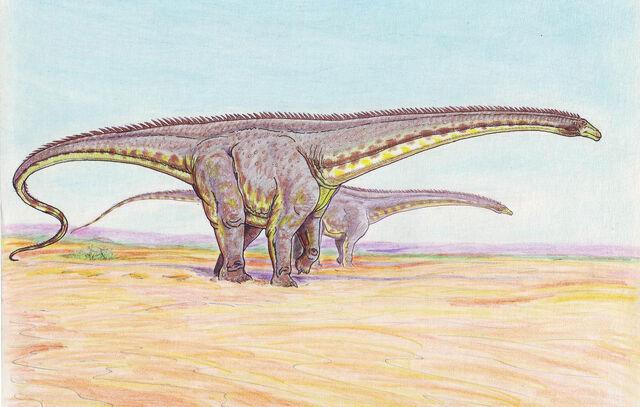 File:Diplodocus longus.jpg