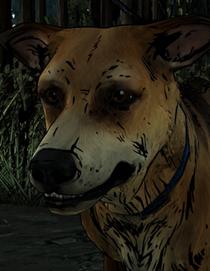 Sam the Survivor Dog