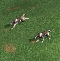 H4 wolves