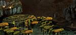 Грибные кольца - ПодземельеH3