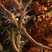 Энт-прародитель-H7-иконка