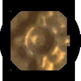 Иконка Альянса Света H6