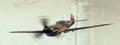 0 warhawk2.png