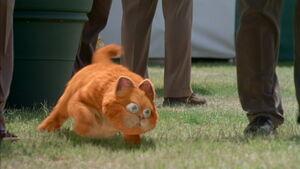 Garfield runs from dogs