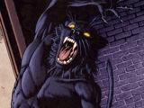 Wildcat Jr.