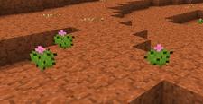 Tiny Cactus ig