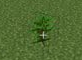 2x2 jungle sapling