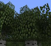 Birch Leaves ig