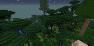 Dense twilight forest