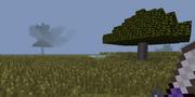 Savanna with acacia tree