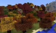 Autumn Woods ig